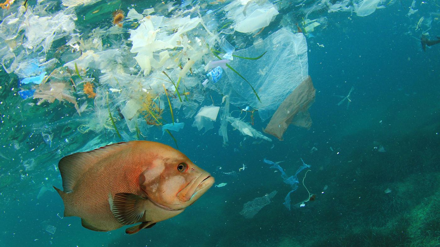Relatório abre caminho para metodologia padronizada na medição de plásticos nos mares